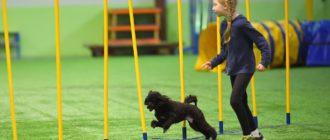 собачьих соревнований