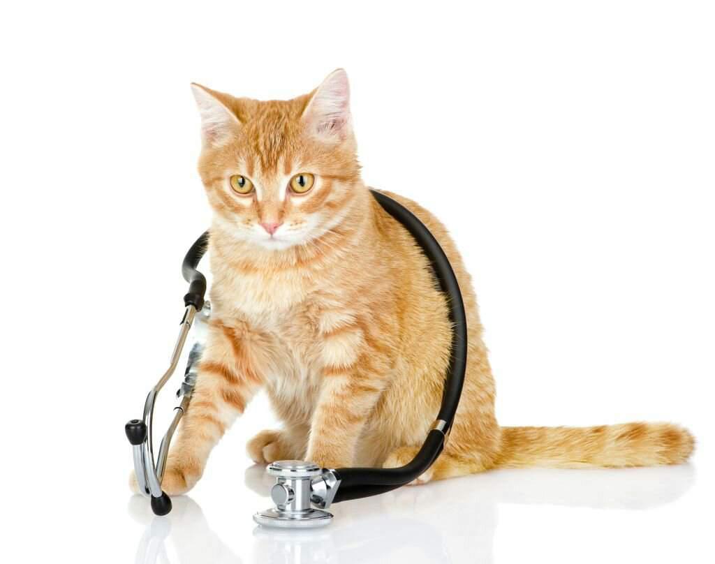 здоровье кота