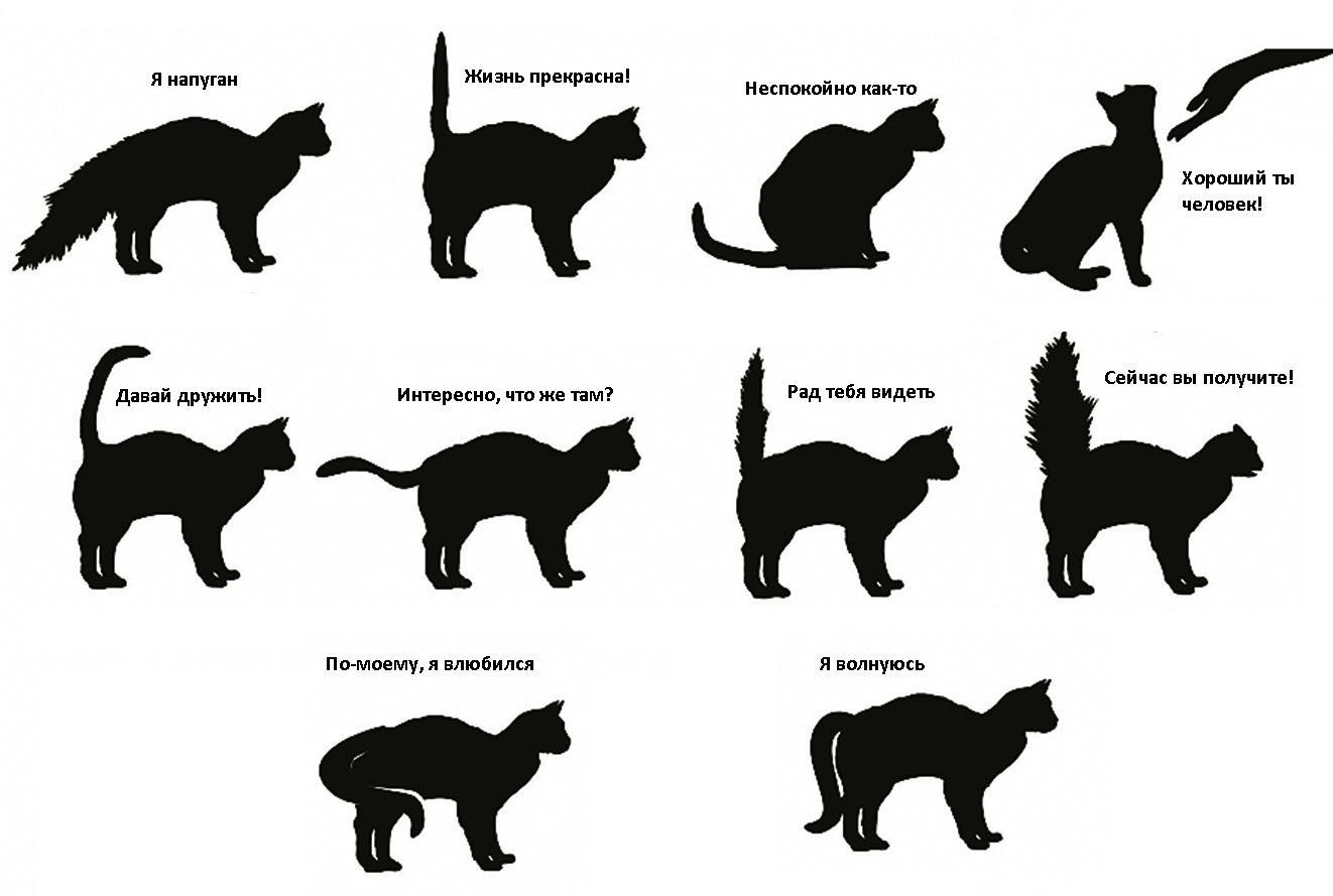 поведение домашней кошки
