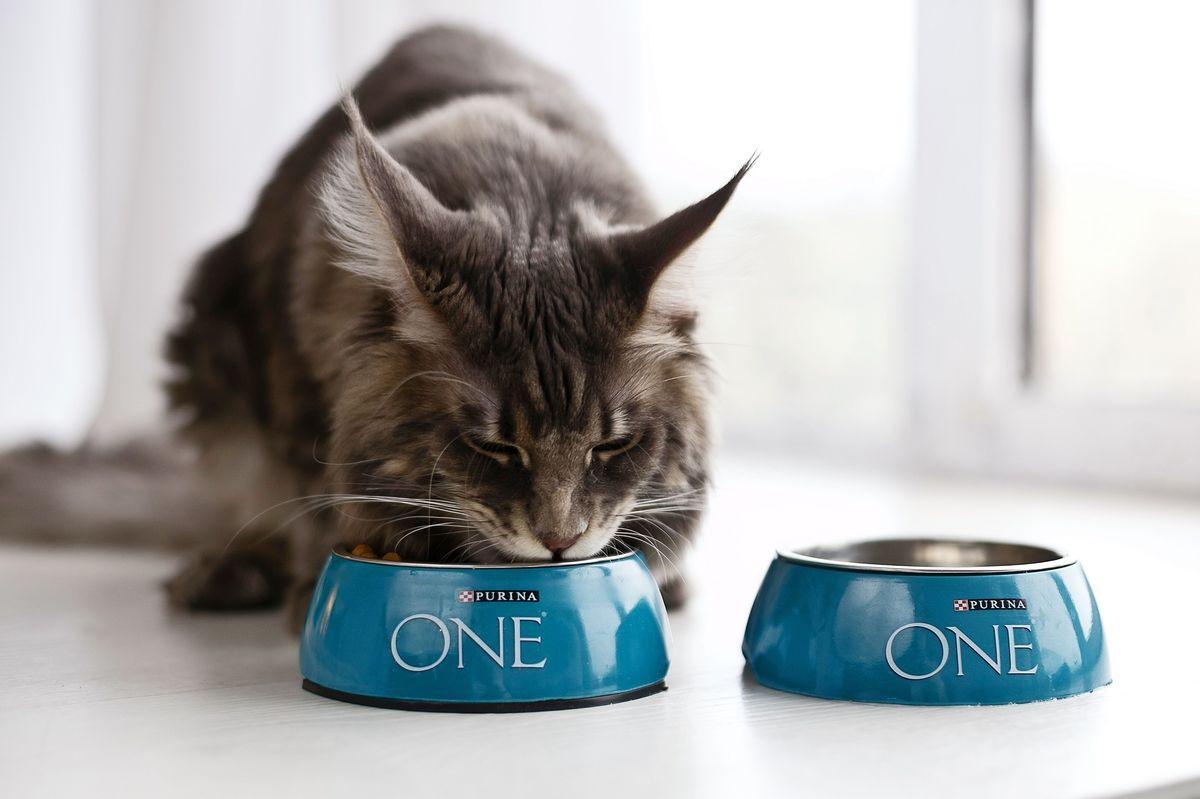 кормов для кошек