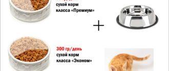 Особенности рациона котят