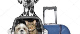 перевозке животных
