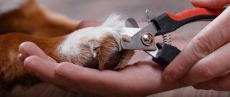 Как правильно стричь когти собаке когтерезкой