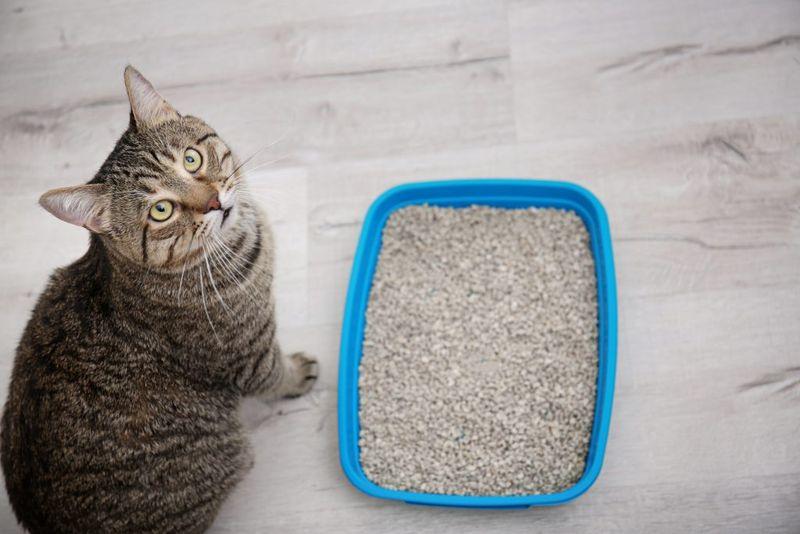 Как отучить кота писать в неположенном месте