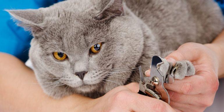 Как стричь когти коту в домашних условиях