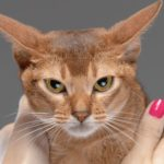 Что делать, если кот блюет