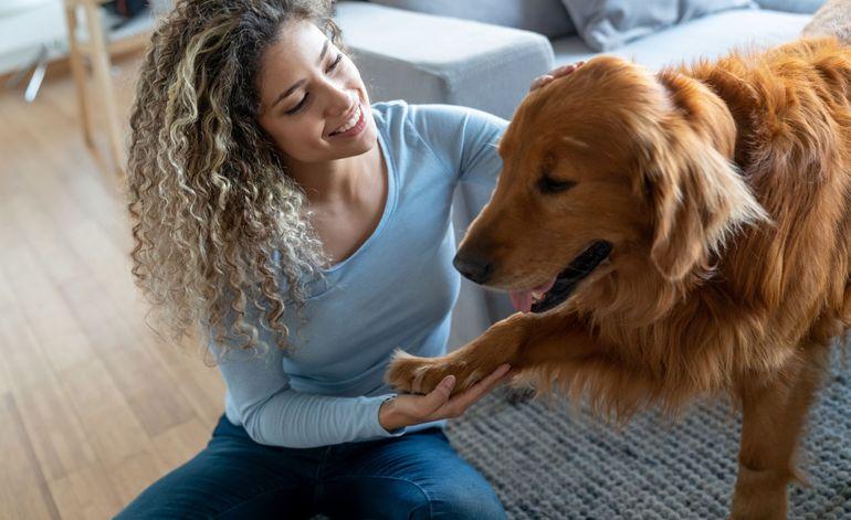 Первая течка у собаки: в каком возрасте