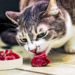 Уход за кошками корм