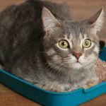 У кота запор: как помочь