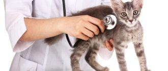 Иммуностимуляторы для кошек