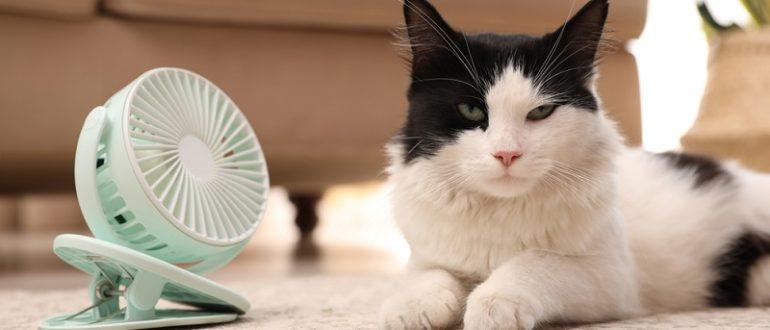 Как помочь кошке в жару
